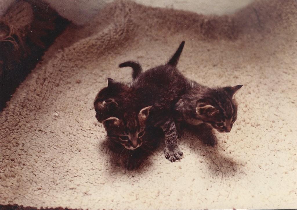 Mačići od Klio