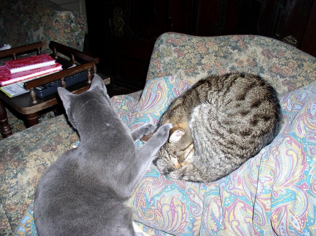 Kasandar i Primus, masaža