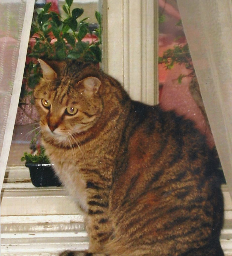 Kreten na prozoru-sredjeno